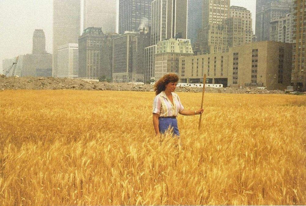 Wheatfield – A Confrontation, Агнес Денес, 1982. Світлина:  greenword