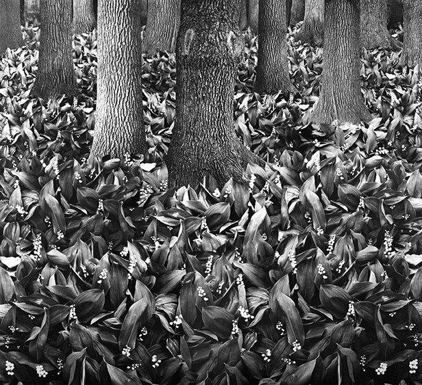 Александр Супрун. Весна в лесу. 1975, фотоколлаж, серебряно-желатиновая печать. Архив Павловых.