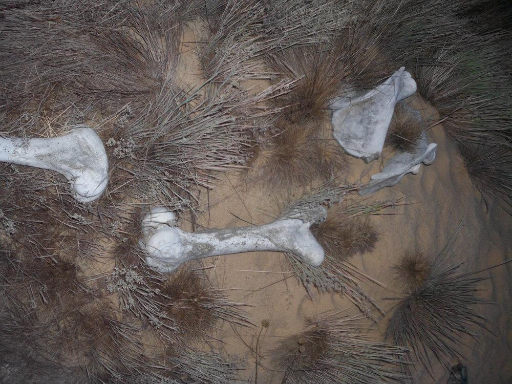Документація акції «Ніч у лісі» (організатори: рух «Ночь»; куратор: Нікіта Кадан), Пуща-Водиця, 2015. Автор світлини: Антон Саєнко