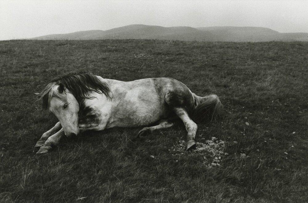 Брюс Девідсон, Без назви, Уельс, 1965