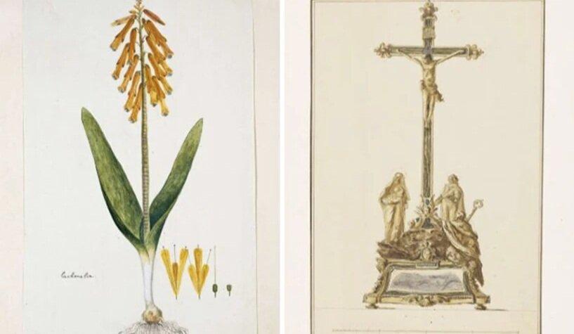 Laughingalia aloides, автор невідомий | «Картина розп'яття»