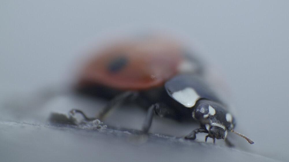 Кадр з фільму «Серед комах» Данкана Каулза